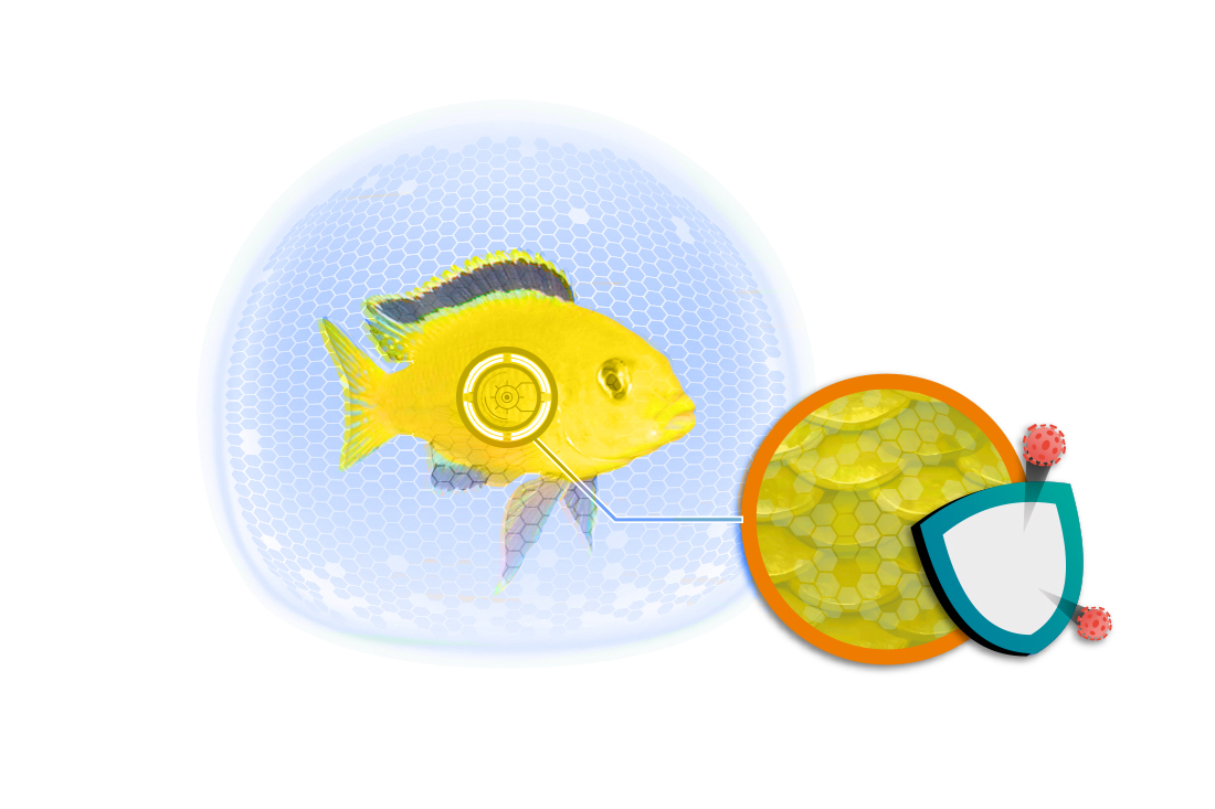 Fish Protection Dosator - Protects fish from disease
